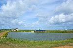 カフクのエビ養殖池